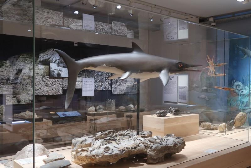 Caspar Klein: Rekonstruktion des Hauensteiner Ichthyosauriers